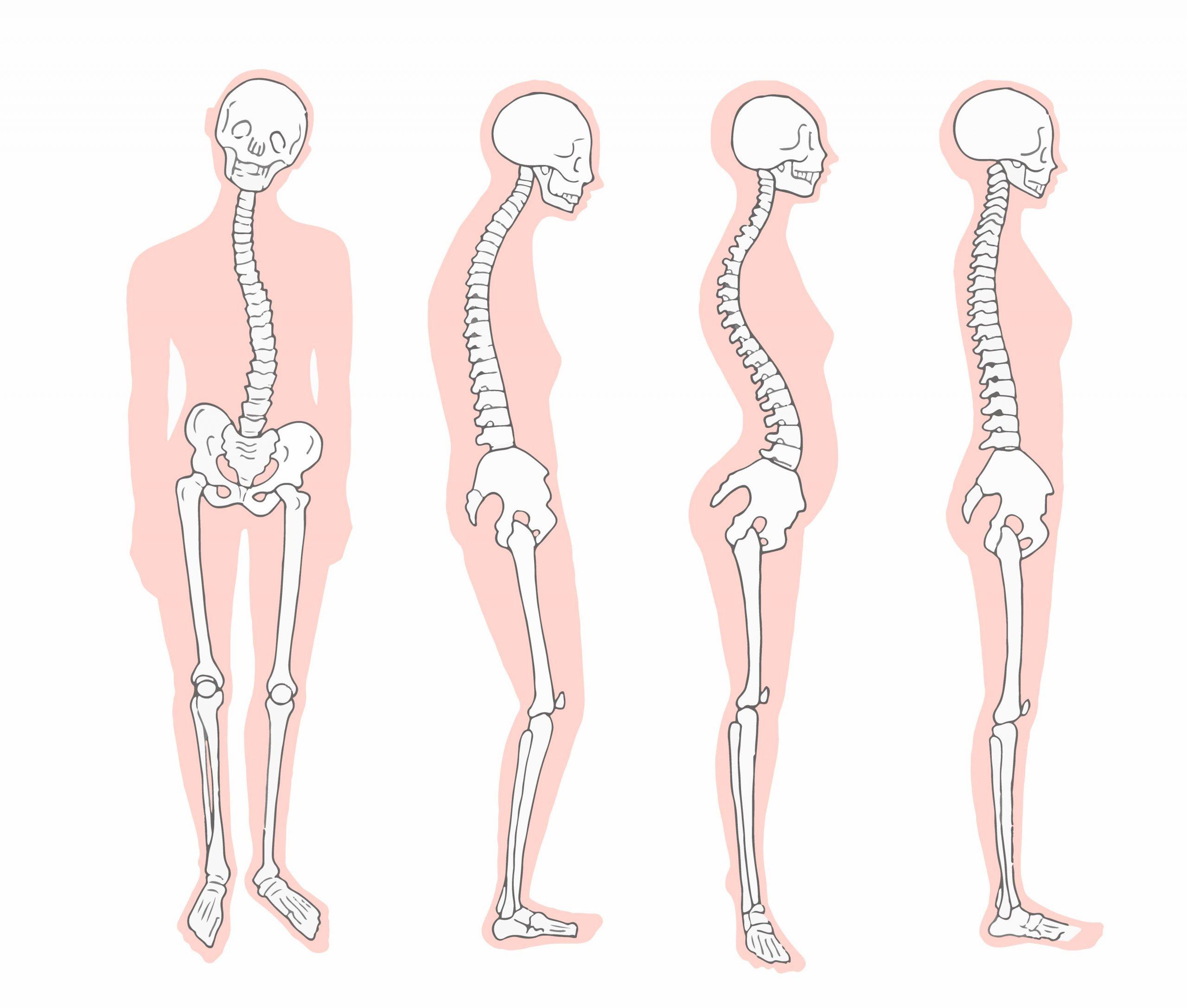 cosa è la postura