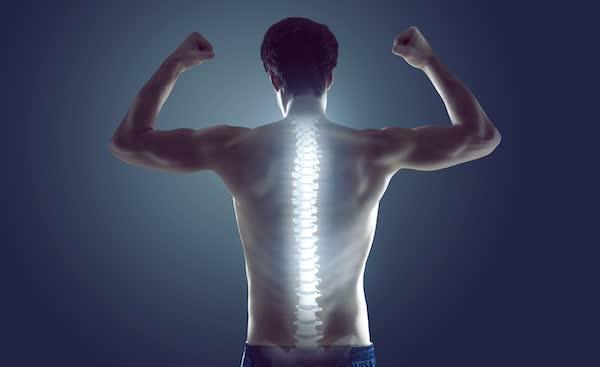 La colonna vertebrale stabilità e mobilità